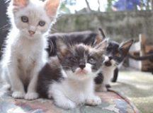 Estarão disponíveis para adoção 15 gatos, todos vermifugados. Foto: Thiago Benedetti/PMD